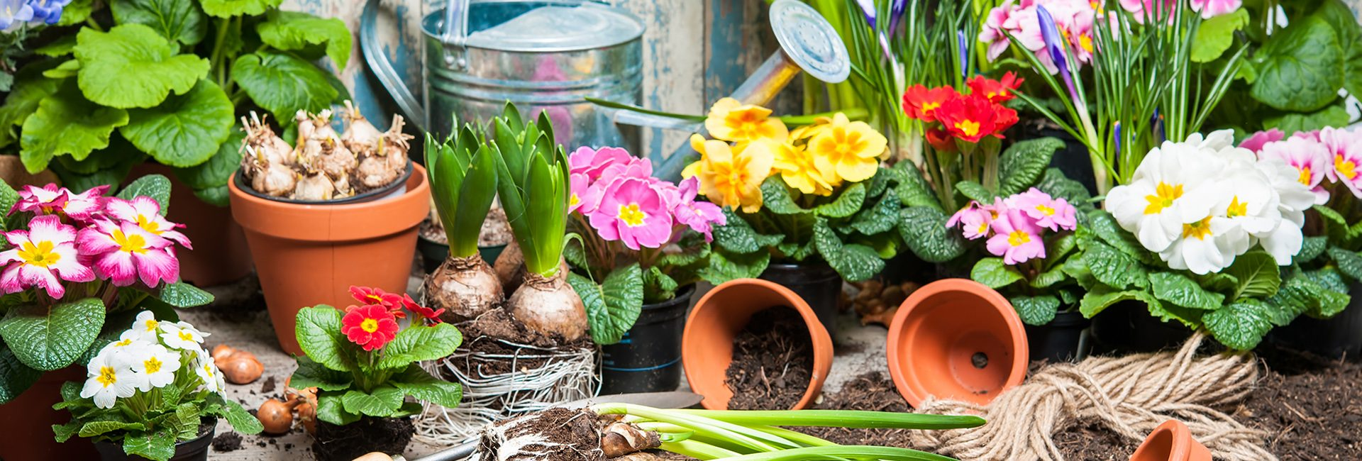 Frühlingszwiebeln in Parsberg kaufen