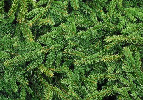 Weihnachtsbaumverkauf Parsberg Tannenbaumverkauf Parsberg